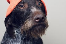 Dogs rockin hats / What could beat a dog in a hat? Nothing, thats what.