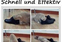 Tierbilder witzig