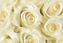 Roses for Lauren / Blush and white roses for Lauren.