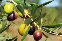 Products I Love: olio, olivi & co. #food & co. / high quality food #olive #extravirgin #food