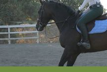Equine Health, therapy and help!