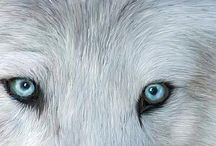 Wild Eyes / A collection of wildlife art with the emphasis on the beauty of the animal eyes.