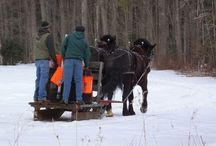 Horse-Drawn Sap Gathering Contest! / Nothing like a sweet event to welcome spring!