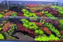 Aquascape, Vivarium, Terrarium & Paludarium