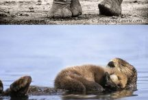 Animal parents, so beautiful!