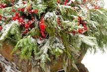 winter themes for floral, home, holiday / by Marilyn Craighead