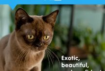 Cat and Dog breed facts