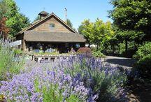 Wilsonville, Oregon / The city of Wilsonville