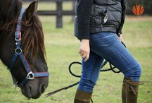 Equine Dojo / Experiential learning with Horses
