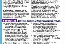 Service dog/Therapy dog training