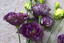 Dundas Castle flowers