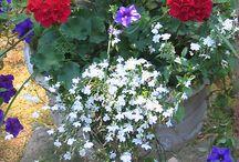 Fiori e composizioni floreali