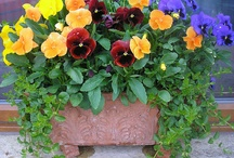 window boxes flower ideas