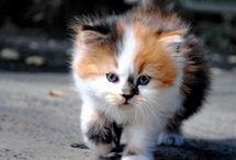 Cats ♡ / Cute fluffy balls :3