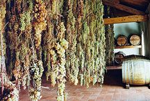 All About Italian Wines, Wineries and Vineyards