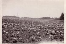 Agricultural Flashbacks / Take a journey back in time with Crop Insurance in America's historical photo collection.