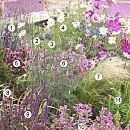 Tuinieren: roze bloemen