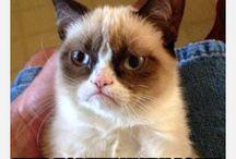 This cat is hilarious