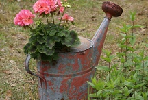 watering can planting