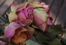 Photos: aaa-ego-voyage.blogspot.fr / Roses fanées
