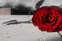 MyPhotos ~flowers~