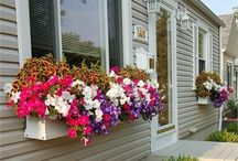 Gardening Ideas / by Holly Gilbert