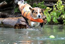 Corgis in Creeks, Ponds, Lakes and Streams! / by Daily Corgi