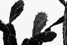 cacti and succulants