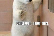 Cute animal sh!t