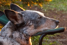 Beautiful Dogs / by Morgon Newquist