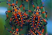 impressive insects