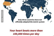 Dayli facts