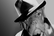 Ginger Paws UK - A selection of Products / A collection paying 'homage' to films or celebrities and especially the uniqueness of Dogue de Bordeaux's.