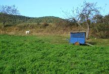 blauer Ziegenwagen / Hof 9: Blauer Ziegenwagen beim Spazierengehen entdeckt