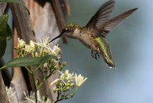 Vogels van over de hele wereld / Mooie vogels