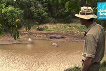 Vilda djur / Djur från savannen och regnskogen.