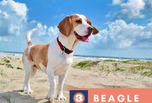 Top 10 Cute Dog Breeds