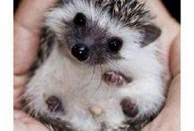 Cuteness overload / All the stuff I found waaay too cute ☺️☺️☺️