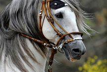 Horses ....