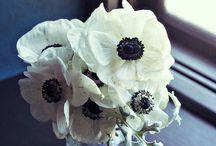 Love these / by Jenny Salchak