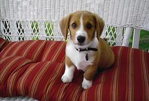 Schmeagles / My favorite dog.    / by Nonya Bizness