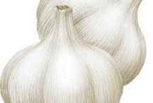 Zelenina a huby (vegetablesand mushrooms)