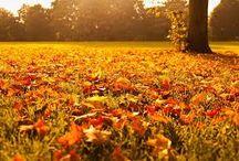 colori d'autunno-autumn colors