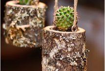 kikstart succulents