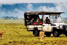 Masai Mara Africa Safaris / Safari trips to one of Africa's finest wildlife and game reserve, Masai Mara in Kenya.