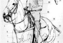 Horses/Polo
