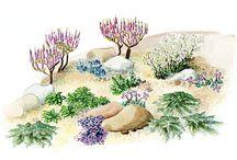Maakellarin kasvit