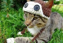 cats knit
