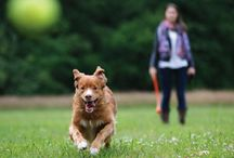 Dog Training / Things that aid in getting your pet trained.