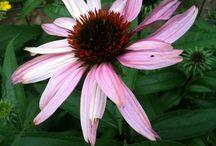 Needing aromatherapy / by Emily Pedigo